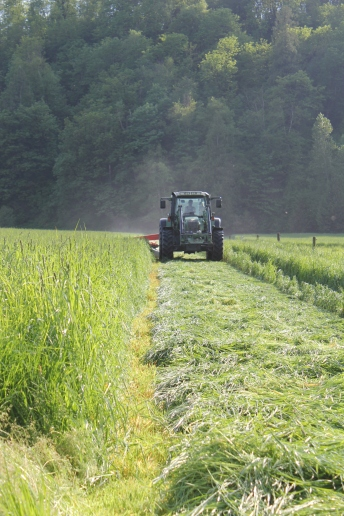 Our grass, cut and harvested as silage for winter feeding, is grown without the use of chemical fertlizers. We use animals manures and compost to fertilize our grass and corn crops.