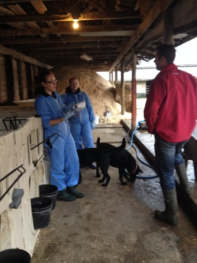 Discussing calf care with researchers from the University of British Columbia.